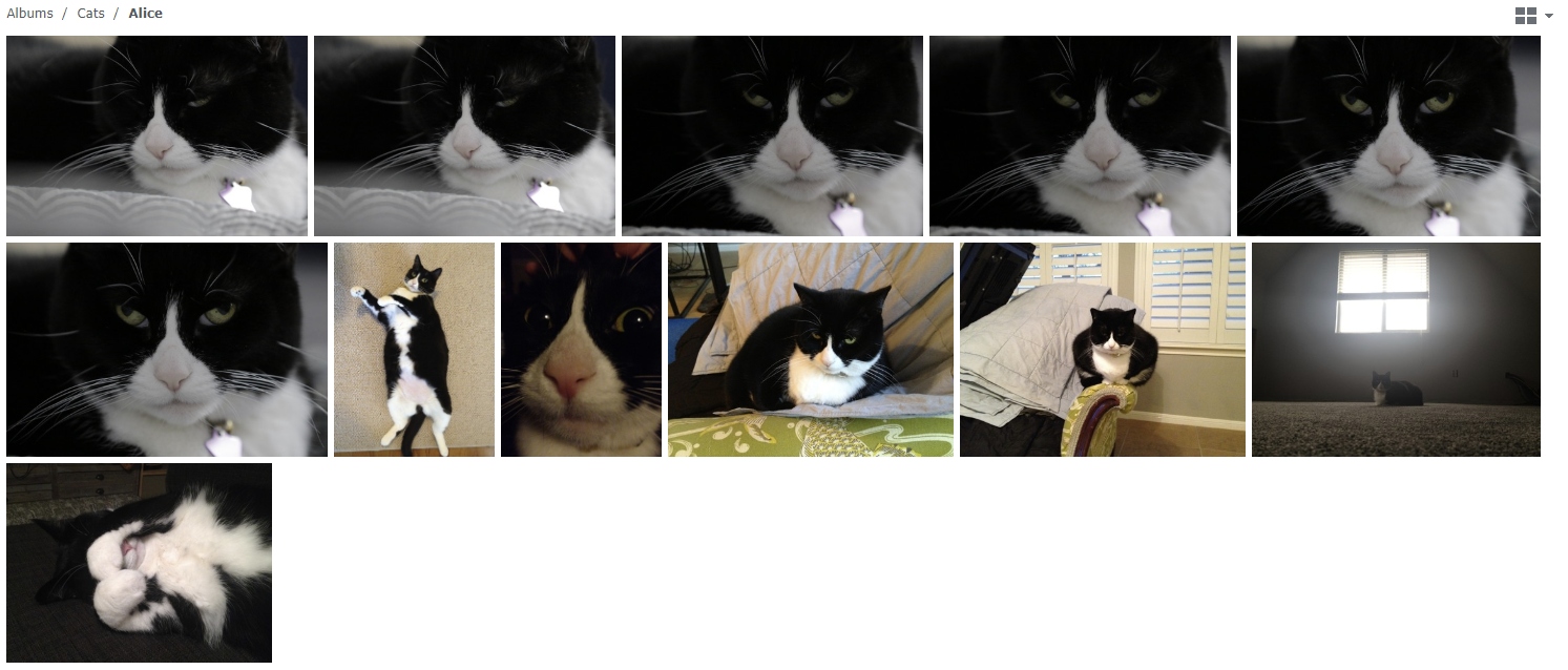 A gallery of images of my cat